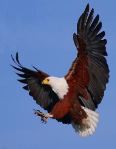 10221-eagle