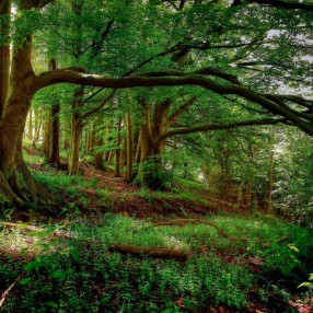 4239487-forest