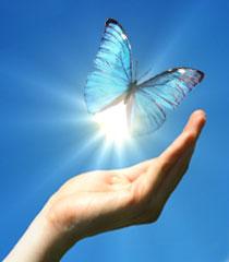 butterfly-release