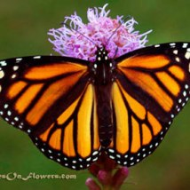 monarch-homepage-photo