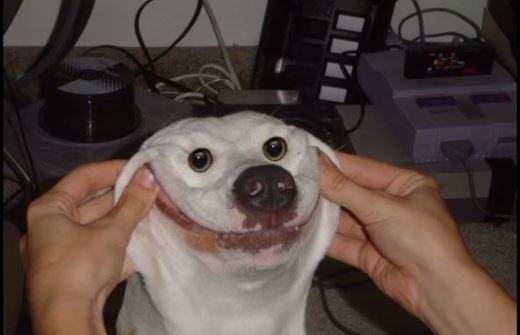 smile_dog_by_regularshowgeek-d8oyezh