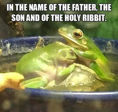 Weekly funnies funny frogs asnowpasta chronicles - Funny frog pictures ...