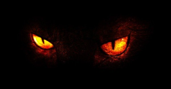 xdemon-cat-800-600x314-jpg-pagespeed-ic-ucaen1kwjo