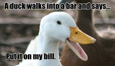 duck-walks-into-bar-bill