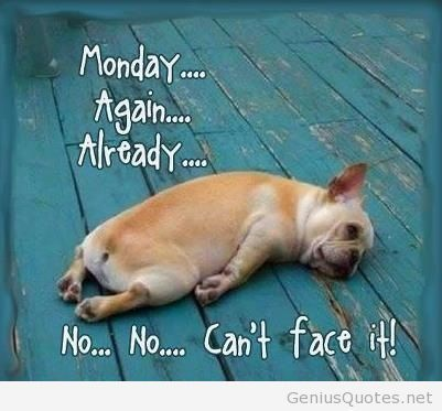 Funny-picture-monday-again-with-a-dog
