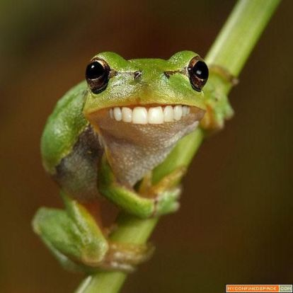 9283e2bbb116c1c1a84a540314ab37d0--funny-frogs-tree-frogs