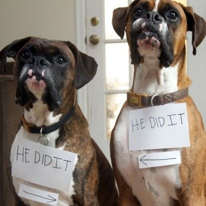 funny-boxer-dog-play