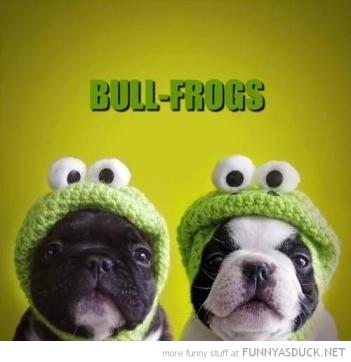 funnyfrogs0056_O
