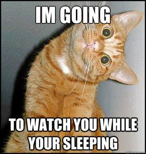 94db777e3d1844e9b400b6d12c4eaae6--funny-cats-funny-cat-memes-humor