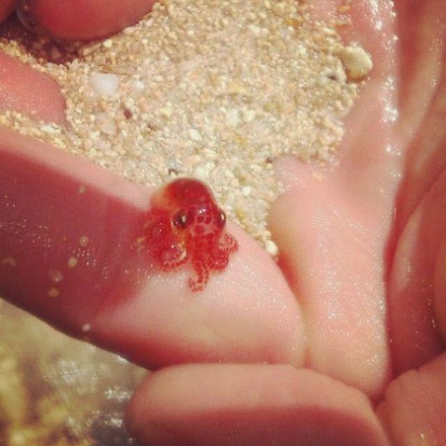 da0e1422865e72a3e42dbebf5b84a27b--google-baby-baby-octopus