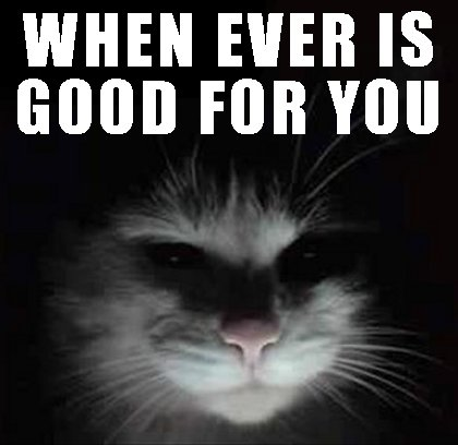 feed-me-cat-whenever-is-good-for-you-mobile-casino-meme