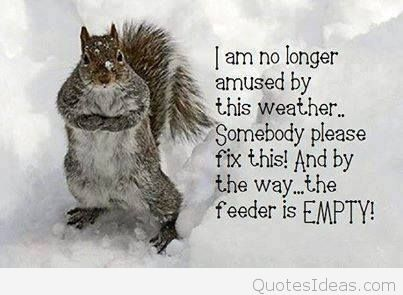 Funny-winter-quote-with-picture