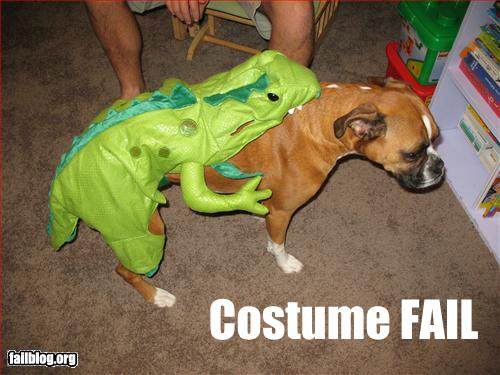 funny-dog-fails-5-background-wallpaper