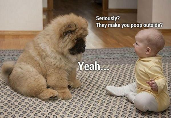 Seriously Dog