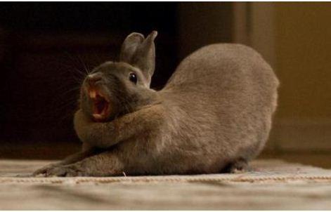 3399-bunnies-attacking-cars-at-denver-airport