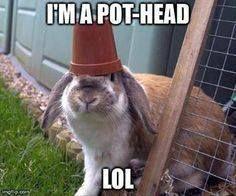 51bde85f72e0d660b5c9972d03d3ae19--silly-rabbit-bunny-rabbits