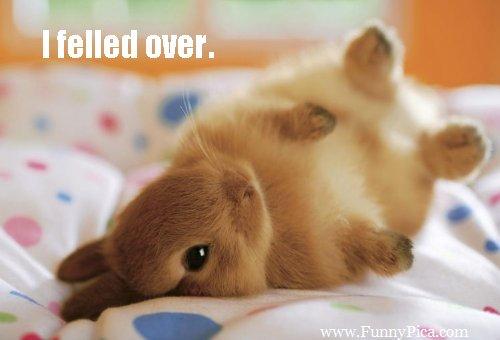Funny-Cute-Rabbits-Funny-Cute-Rabbit-Picture-130-FunnyPica.com_