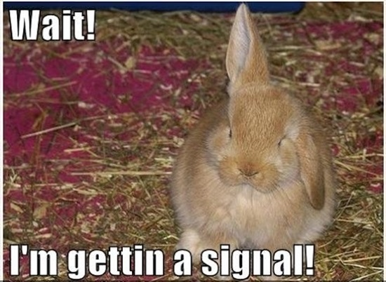 Funny-Rabbit-Pictures-8