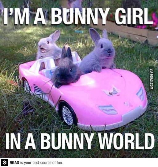 I-Am-A-Bunny-Girl-In-A-Bunny-World-Funny-Meme-Image