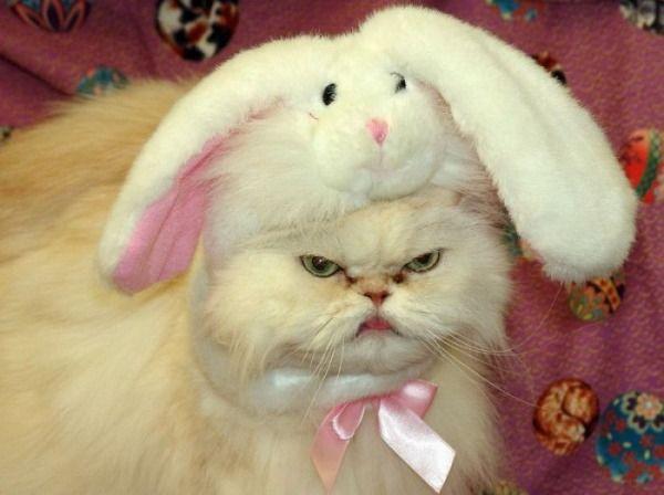 I_Hate_Bunnies_Cat