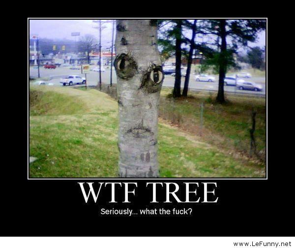 WTF-tree