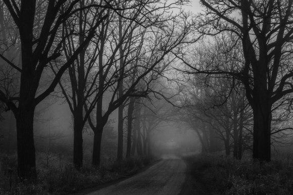 Foggy-road-webblog