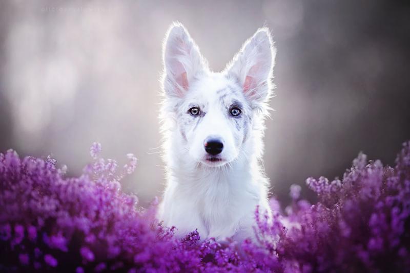 97dc9f1570985eb6b71edc7554c963d1_dog-photography-alicja-zmyslowska-2-11-574036e13f03c__880