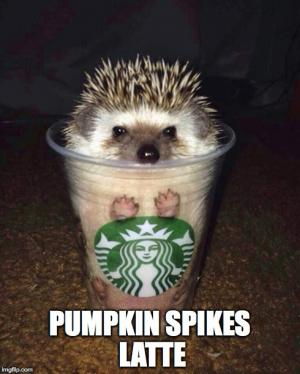 pumpkin spikes latte funny spice meme fall autumn