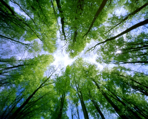tree-tops-7