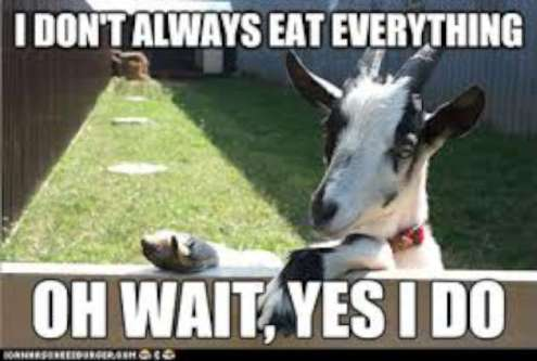 i-dont-always-eat-everything-funny-goat-meme-image