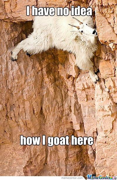 silly-goat_o_1198699